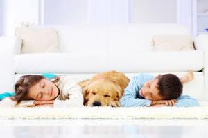 Servizi di pulizia, lavaggio divani e tappeti